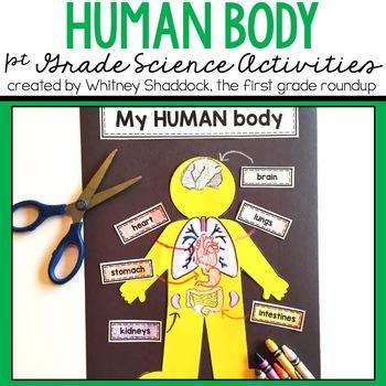 Human Body Mini-Unit