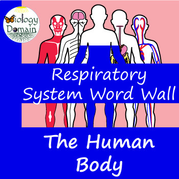 Human Body: Respiratory System Vocabulary Cards
