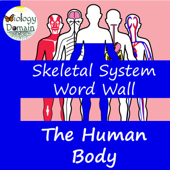 Human Body: Skeletal System Vocabulary Cards