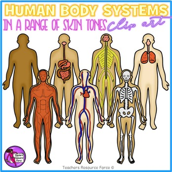 Human Body Systems Clip Art