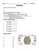 Human Body THE NERVOUS SYSTEM Worksheet