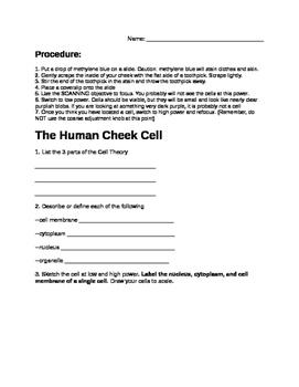 Human Cheek Cell Lab