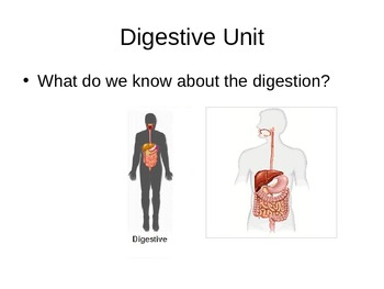 Human Digestive System - PowerPoint Presentation