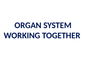 Human Organ Systems Review Activity (10A)