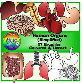 Human Organs (Simple)Clipart