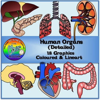 Human Organs (Detailed) Clipart