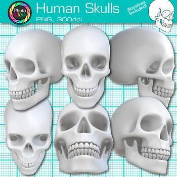 Human Skull Clip Art - Science Clipart - Human Body - Body