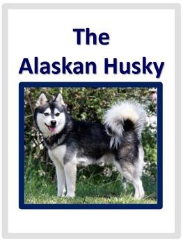 Huskies: Alaskan Huskies