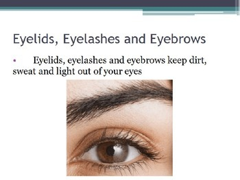 Hygiene - Eye Protection (POWERPOINT)
