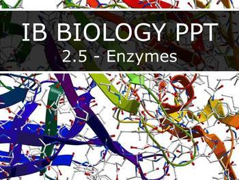 IB Biology (2016) - 2.5 - Enzymes PPT