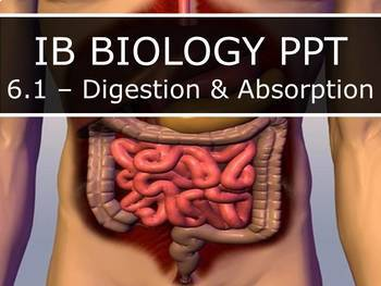 IB Biology (2016) - 6.1 - Digestion & Absorption (PPT)
