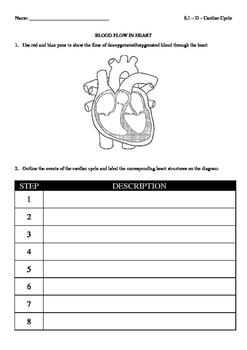 IB Biology (2016) - 6.2 - Cardiac Cycle Chart (blank)
