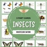INSECTS 3-PART MONTESSORI NOMENCLATURE CARDS