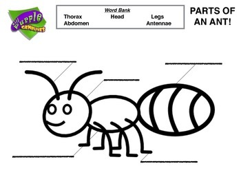 Identify the Parts of an Ant!