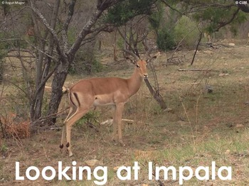 Impala Antelope - Interactive PowerPoint presentation