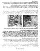 Imperialism in Rwanda: The Rwanda Genocide Graphic org. an