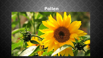Importance of Pollen