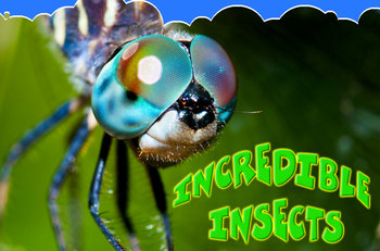 Incredible Insects INTERACTIVE version