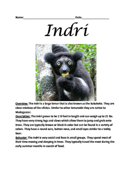 Indri - lemur informational article lesson questions facts