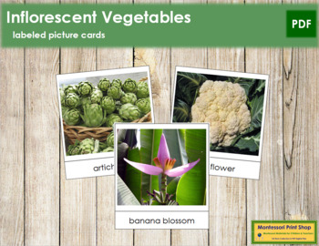 Inflorescent Vegetable Picture Cards