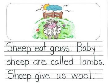 Informational Writing Mentor Texts in Kindergarten: Koalas