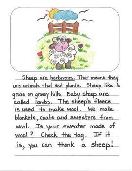Informational Writing Mentor Texts in Second Grade: Koalas