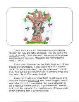 Informational Writing Mentor Texts in Third Grade: Koalas,