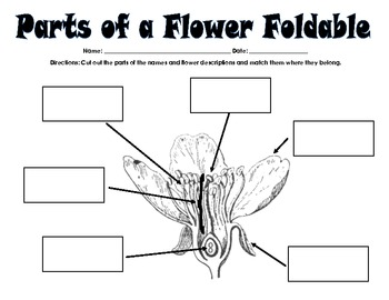 Inner Parts of a Flower Foldable