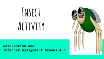 Insect Activity/ Internet Assignment