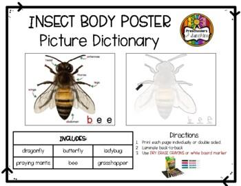 Insect Body Part Poster Set