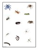 Insect Bug Spider Matching File Folder Game Common Core