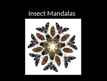 Insect Mandalas