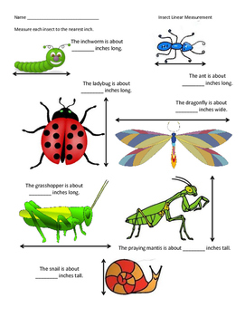 Insect Measurement