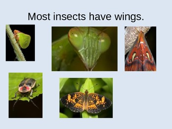 Insect Power Point
