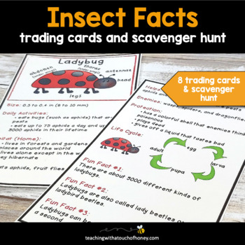 Insect Trading Cards: Facts About Insects