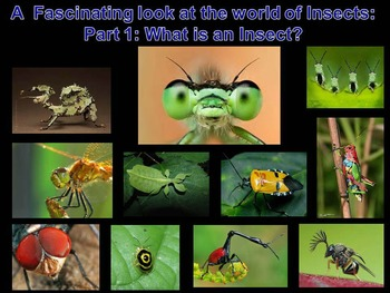 Insects: What is an Insect? (lots of animations)