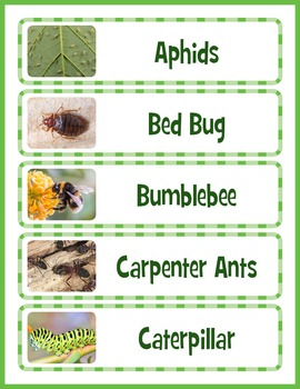 Insects Word Wall