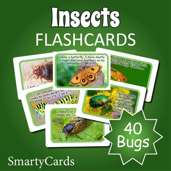 Bugs and Insects Flashcards