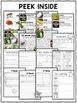 Nonfiction Insect Unit Activities