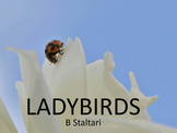 Insects - Facts about Ladybirds