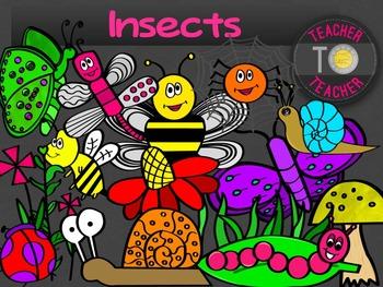 Insects {TeacherToTeacher Clipart}