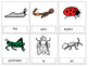 Insects and Bugs Lotto Cards Match