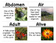Insects and Plants Science Vocabulary Cards (FOSS Insects