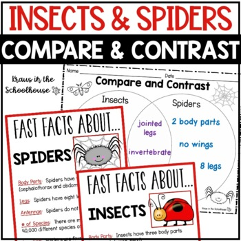 Compare and Contrast Insects and Spiders - Reading Compreh