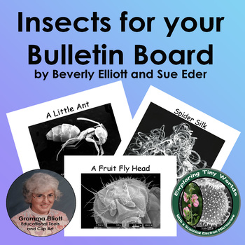 Insects for your Bulletin Board – Scanning Electron Micros