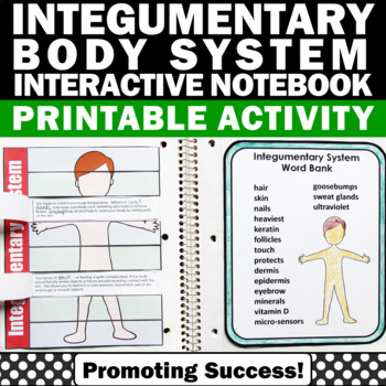 integumentary human body system activities for kids