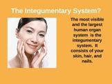 Integumentary System Power Point Presentation- Skin, Hair