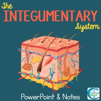 Integumentary System PowerPoint Lesson and Notes - Skin Po