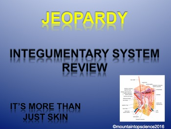 Integumentary System Review Jeopardy