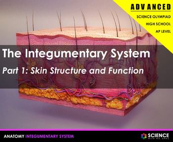 Integumentary System - Skin, Hair, Nails and Skin Disorder